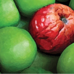 spoiled red apple among green apples