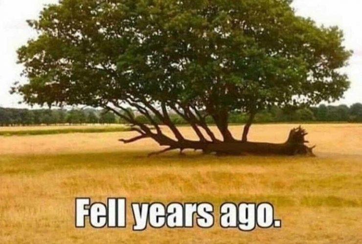 Fallen Tree still growing